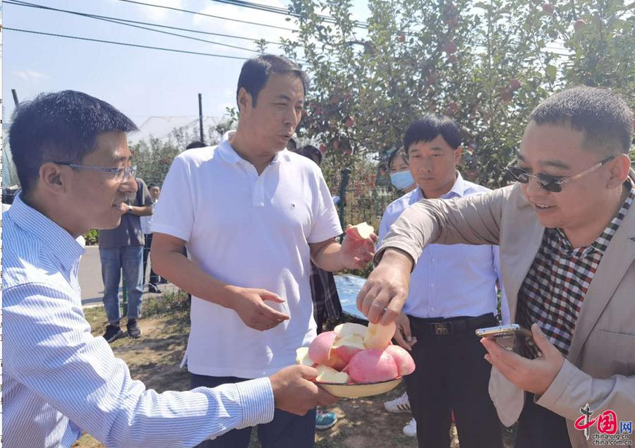 [Китайская мечта – Любовь к Хуанхэ] Яблоки помогают фермерам из уезда Цзисянь провинции Шаньси освободиться от бедности и увеличить доходы
